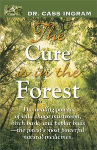 the-cure-is-in-the-forest